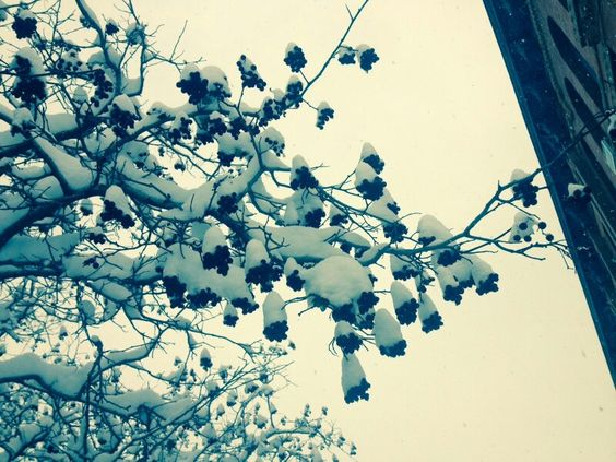 Berries and Snow by Leah Neas