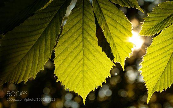 (de)light! by Jan_M