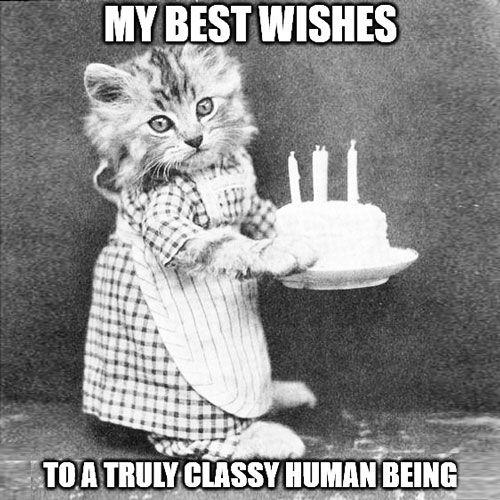 An Absolute Classic The Happy Birthday Song Funny Happy Birthday Meme Happy Birthday Cat Cat Birthday Memes