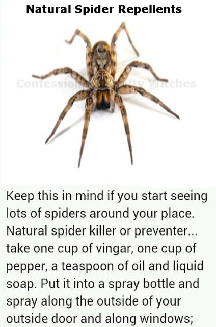 Herbal Health Care: Spider-Repellent Recipes