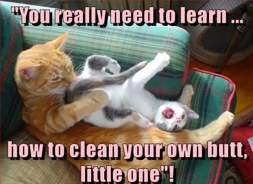 Hilarious Memes 2018 Clean Inappropriate Cat Cat Quotes Funny Funny Cat Memes