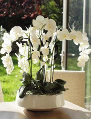 Orchids in a white lacquered bowl