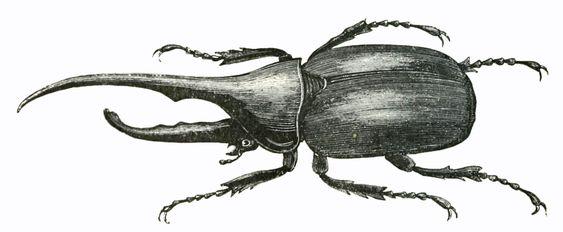 ヘラクレスオオカブトのイラスト
