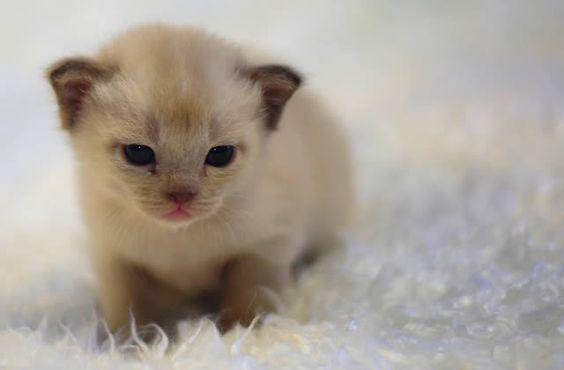 Les photos ou vidéos d'animaux mignons et/ou rigolos vous donnent envie de crier « Aaaw » ? Vous êtes du genre à kidnapper un chaton pour le câliner même s'il n'est pas d'accord ? Justine vous parle de ces drôles de comportements. Vous savez comme parfois, nous parlons un peu de sujets de fond, de [...]
