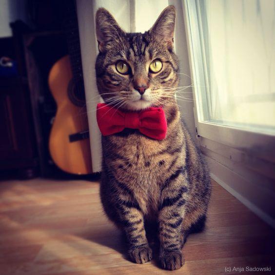 Mr Yoshi Katzenliebe Pinterest Yoshi - Kitten born with dwarfism is half the cat but twice as cute