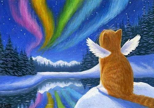 Men's Ladies T SHIRT kitten cat going to Heaven northern lights beautiful sad  - Cat Tshirt #cat #tshirt #catshirts