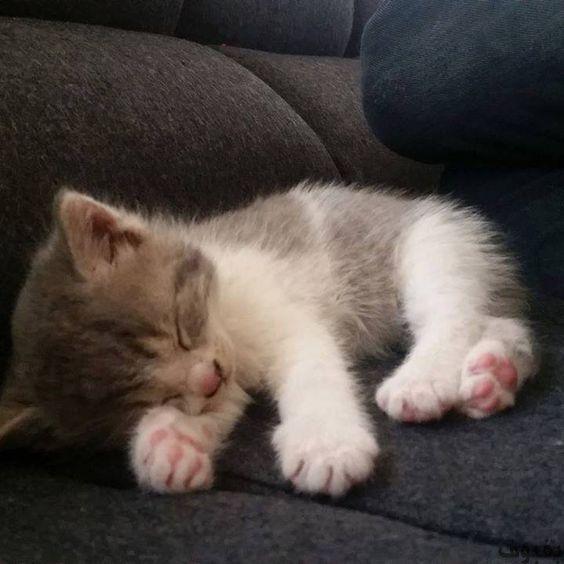 صور قطط صغيرة أجمل صور القطط الصغيرة في غاية الجمال بفبوف Cute Baby Cats Cute Cats Baby Cats