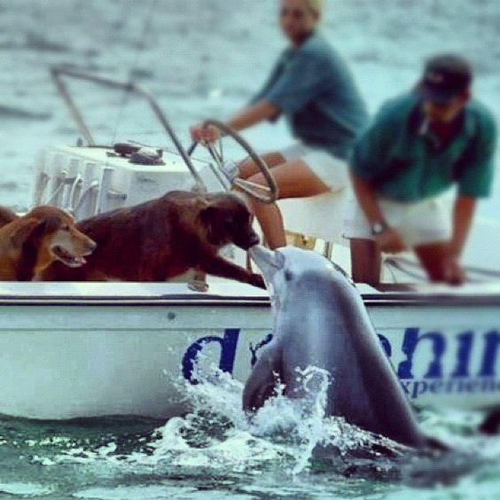 Amazing Dolphin Kissing a Dog on a Boat: