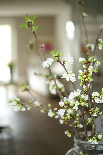 white blossom by wood  wool stool on Flickr.
