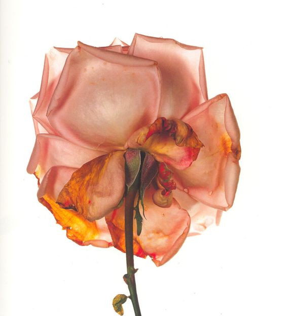 Irving Penn was born on June 6th, 1917 in New Jersey and died in 2009. Of all…
