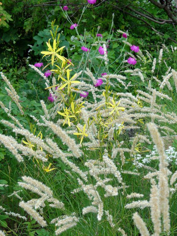 Die seltener verwendete Liburnische Junkerlilie (Asphodeline liburnica) mit Wimpern-Perlgras und Kronen-Lichtnelke)