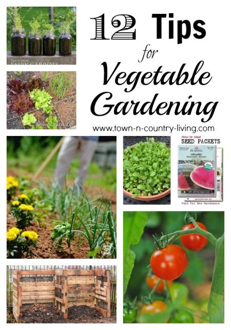 Starting a vegetable garden vegetable gardening and seed for Starting a vegetable garden