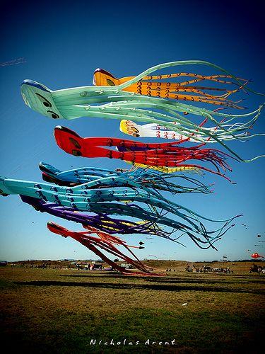 Octi-kites by narent23, via Flickr...a kite festival in Berkeley