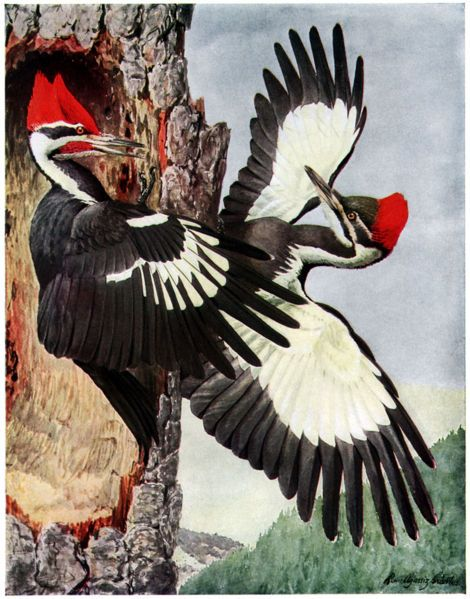 woodpeckers - Google Search
