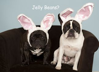 : ): Frenchie Loads, Pet Dogs, Easter Card, Bulldog Easter, Holiday Cards, Dog Funnies, Dog Stuff, Funny French Bulldogs
