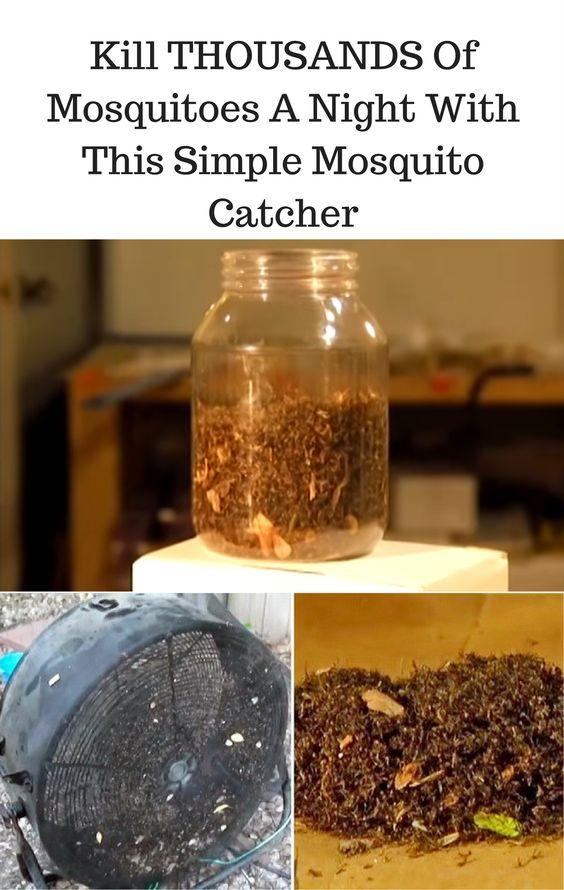 0ad23b5cd2bb8d1c2397cd31090e289f mosquito trap mosquito killer diy