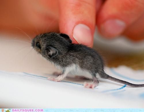 Oh!  little mouse