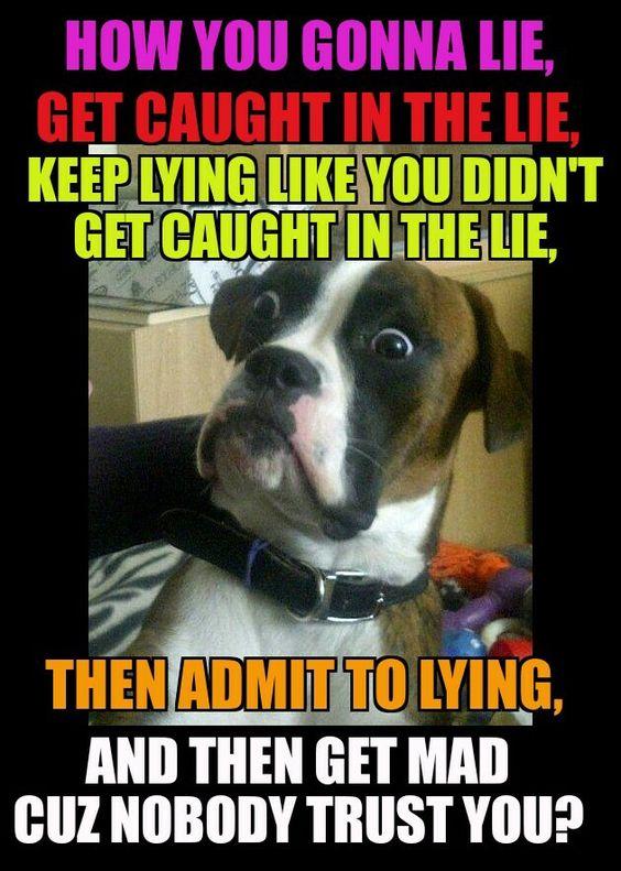 Liar Humor Liar Humor Funny Quotes Funny Facts
