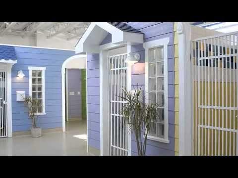 Bayside Pet Resort Spa Virtual Tour Youtube Pet Resort Dog Boarding Facility Dog Hotel