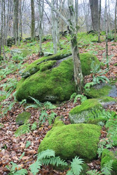 Encourage Development of Moss: To encourage moss on rocks, terracotta pots, or other objects in a shady garden, mix buttermilk and a clump or two of existing moss in a blender to make a slurry that can be painted on your moss-worthy items. Then, keep the environment moist until a green cover begins to form.