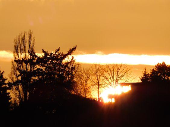 Mit Andacht wenden sich die Äste der Bäume zum Himmel. Die Sonne scheint sanft, kräftig hindurch.