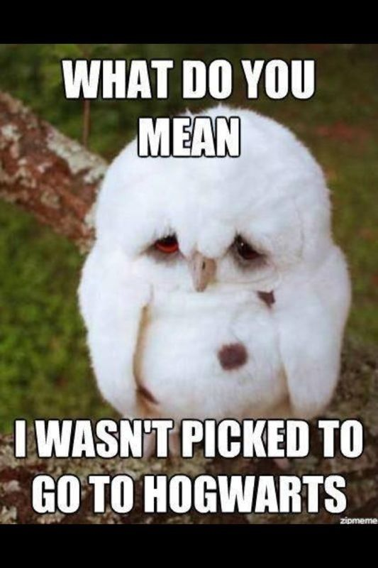 Owl What Do You Mean I Didn T Get Accepted To Hogwarts Google Search Funny Animal Quotes Cute Animal Quotes Funny Animal Photos