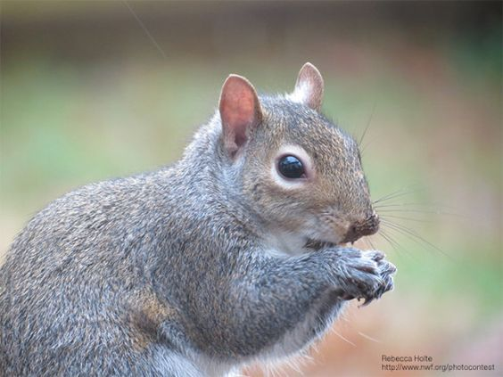 Nutty Ways to Celebrate Squirrel Appreciation Day This Year