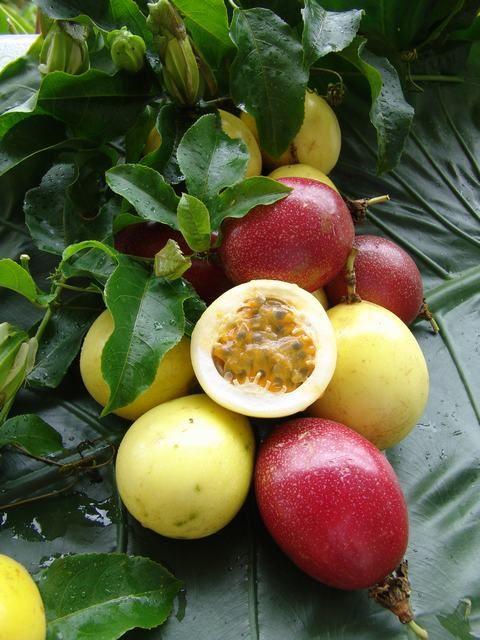 L'évasion vers les contrées lointaines productrices de Maracuja - Fruit de la passion. Voyage imaginaire vers Madagascar où pour la première fois de ma vie j'ai vu un arbre à fruits de la passion