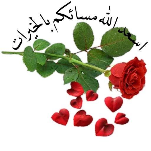 مساء الخير Good Morning Gif Good Evening Flowers Photography