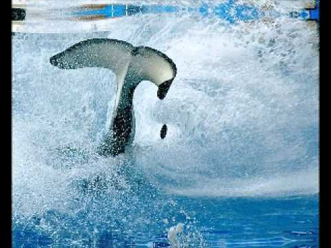 RELAX OR STUDY WITH NATURE SOUNDS: Whale Song ... - YouTube