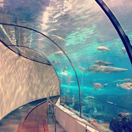 barcelona aquarium and the aquarium on