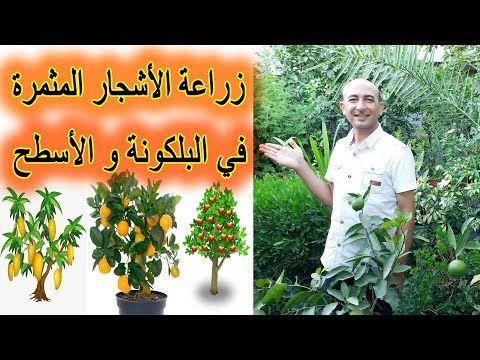 الطريقة الصحيحة لزراعة الاشجار المثمرة في البلكونة و على الاسطح Growing Fruit Trees In Balcony Youtube Plants