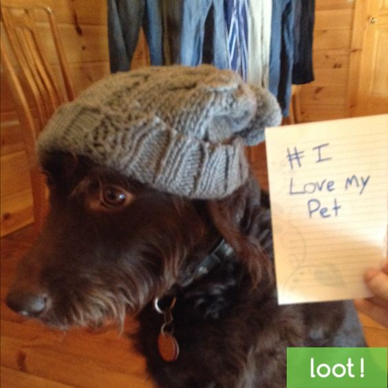 Dress up your furry friend and take a photo using Loot App to earn cash! Just make sure to write #ILoveMyPet on a piece of paper in the photo, too! http://lksn.se/loot #LootApp #Loot #Pet #Dog #Cat