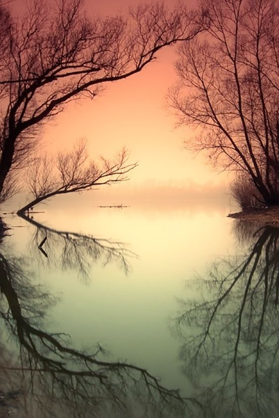 Phenomenal Reflection Pictures on Water #nature #photography #reflection: