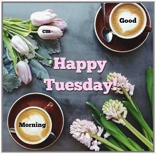 GOOD MORNING! HAPPY TUESDAY! #goodmorningpost #goodmorning #gm #morning  #morningpost #morning… | Happy tuesday morning, Good morning tuesday, Good  morning greetings