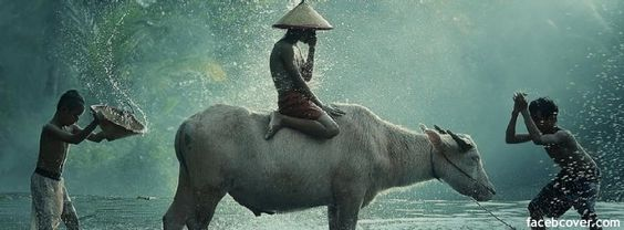 Download Water Buffalo Facebook Cover for Free