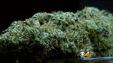 Marijuana And Health Symposium At National Jewish Health Explores Studies