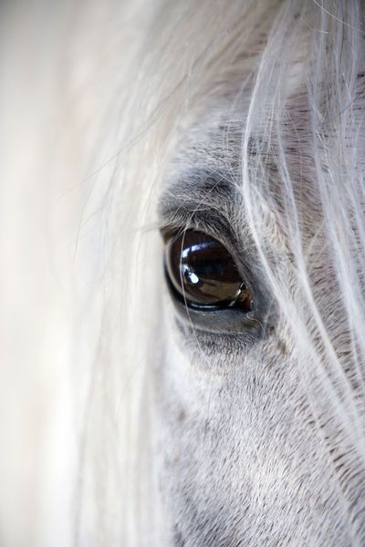 Horse: