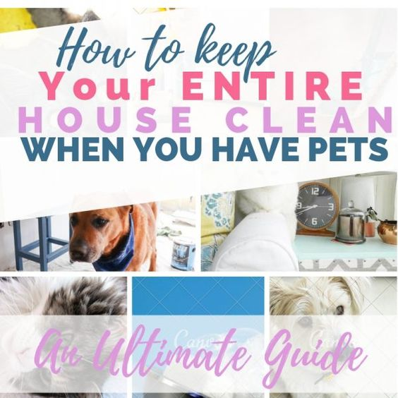 ULTIMATE GUIDE to clean up pet messes! Pee on carpets, upholstery, mattresses; getting pet hair out of clothing, bedding; best pet hair vacuums #cleaning #pets #diypassion