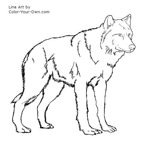 wolf coloring pages for kids | Wolf Standing Coloring Page ...