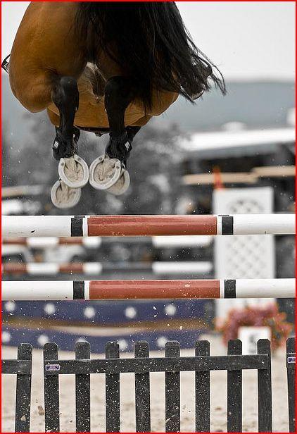 Un caballo puede brincar obstaculos pero tu no eres un caballo y yo no soy obstaculo, yo soy tu meta!