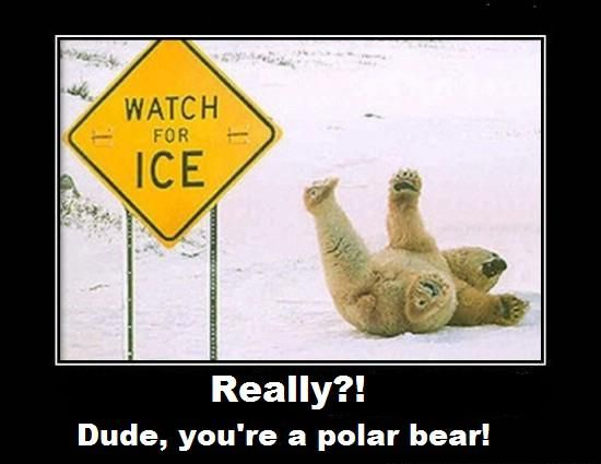 Image result for really? dude you're a polar bear