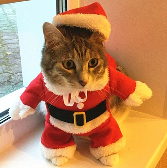 Wow 2020 Christmas Cat Clothes Halloween Clothes For Cats Costume New Year Outfit Pet Cat Clothes Cat Clothes Cat Christmas Outfit Santa Dog Costume