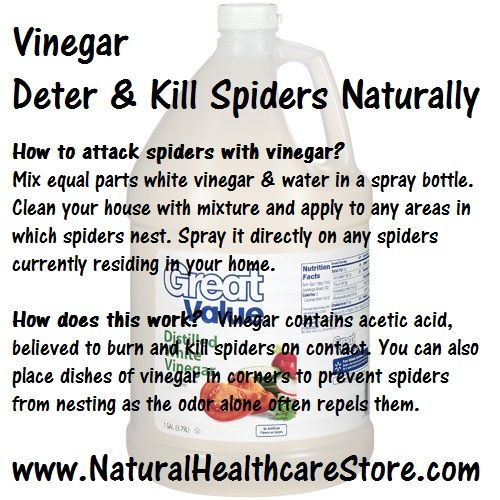 Vinegar ~ Deter & Kill Spiders Naturally  How to attack spiders with vinegar?  How does this work?  www.naturalhealthcarestore.com