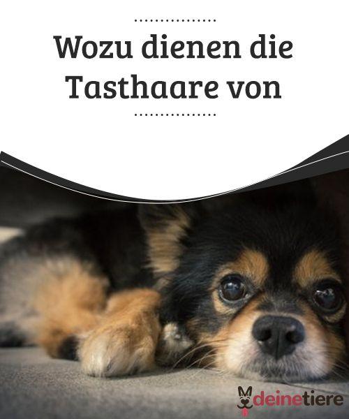 Wozu Dienen Die Tasthaare Von Hunden My Animals Hunde Tiere Hund Und Katze