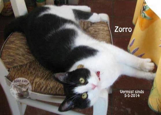 #VERMIST Zorro sinds 5-5-2014 #Krombeke West Vlaanderen BE Contact: An Straat: Barlebuizestraat Geslacht: gecastr. #Kater  Leeftijd: 3 Jaar Omschrijving: halsbandje, heel lief HEEFT SPECIALE VOEDING NODIG VOOR BLAASGRUIS https://www.facebook.com/sensitiefvzw https://www.facebook.com/photo.php?fbid=661368783917255&set=a.141933892527416.30865.100001324196842&type=1&theater