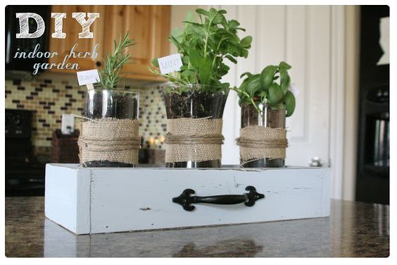 Mrs. This and That: Indoor herb garden