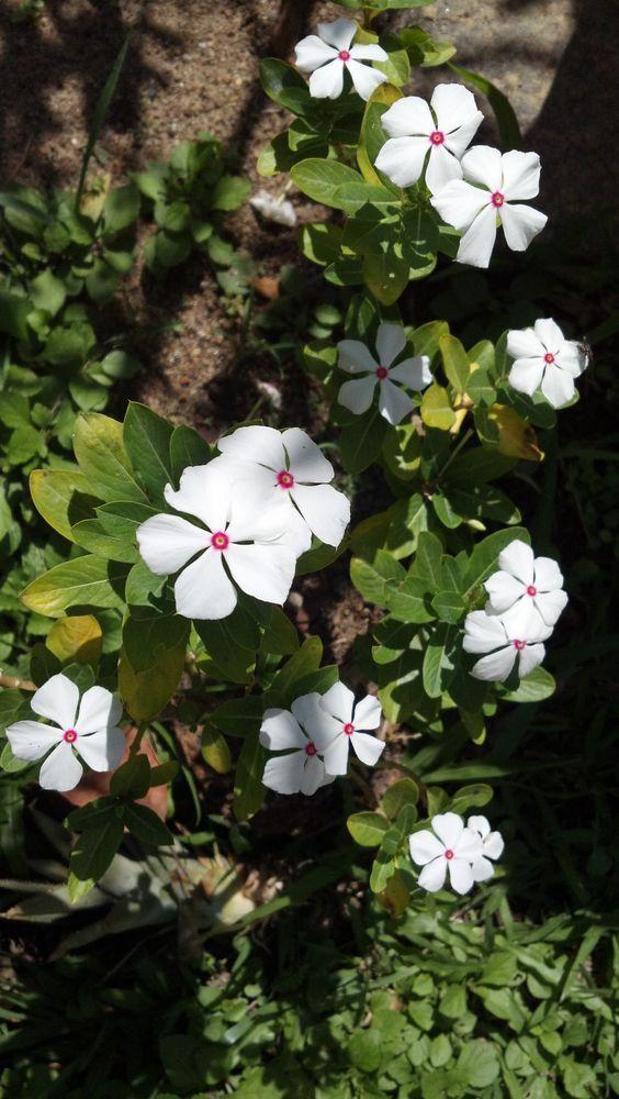 Flores em Três Rios - RJ - Brasil