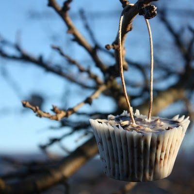 Seeds, nuts, (berries), fat + twine - overnight in the fridge and voila:   Birdmuffins!
