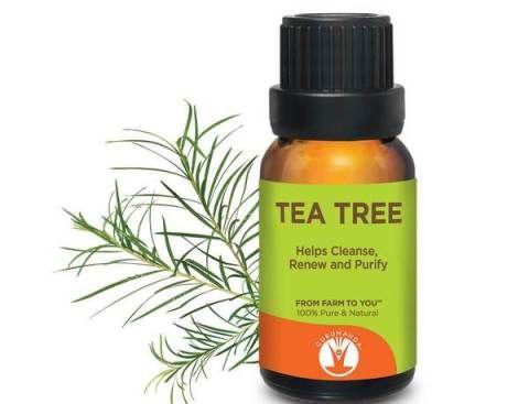 Tea Tree Oil Keloid On Nose Piercing Treatment Keloid Nose